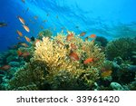 Corals And Fishes