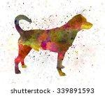 danish swedish farmdog in... | Shutterstock . vector #339891593