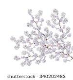 white apple flowers branch... | Shutterstock . vector #340202483
