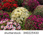 autumn flowers in different... | Shutterstock . vector #340225433