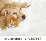 Stock photo kitten and puppy 340367987