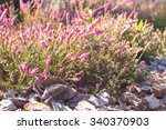 image of a blossoming heather....