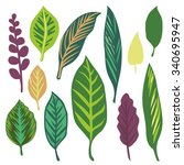 hand drawn leaves of tropical... | Shutterstock .eps vector #340695947