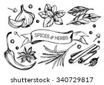 hand drawn set of herbs and... | Shutterstock .eps vector #340729817