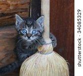 Stock photo funny kitten 34085329
