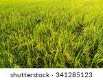 green paddy field landscape in... | Shutterstock . vector #341285123