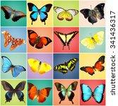 butterflies collection on... | Shutterstock . vector #341436317