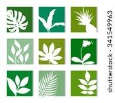 tropical plants set. leaves of... | Shutterstock .eps vector #341549963
