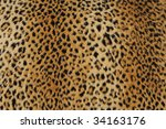 Close Up Of Leopard Skin  Use...