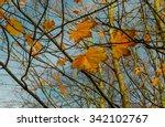 light of november on maple tree ... | Shutterstock . vector #342102767
