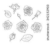 Vector Set Of Hand Drawn Roses...