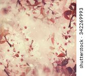 cherry blossom with grunge... | Shutterstock . vector #342269993