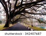 tree branch at lake garden.... | Shutterstock . vector #342407687
