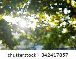 Sunlight Through Leaves On Tre...