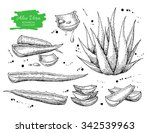 vector hand drawn botanical... | Shutterstock .eps vector #342539963