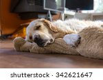 sleeping golden retriever | Shutterstock . vector #342621647