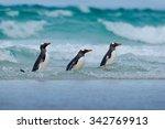 Gentoo Penguin  Three Water...