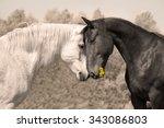 admirer  horse love | Shutterstock . vector #343086803