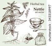 Herbal Tea  Set. Hand Drawn....