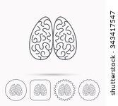 neurology icon. human brain... | Shutterstock .eps vector #343417547