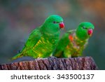 pair of scaly breasted lorikeet ...   Shutterstock . vector #343500137