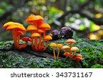 Mushrooms  Avon Trail  Ontario...
