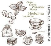 lemon  mint  ginger   . hand...   Shutterstock .eps vector #343761953