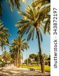 palm trees in palma de mallorca ... | Shutterstock . vector #343872197