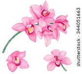 watercolor orchids set isolated ... | Shutterstock . vector #344051663
