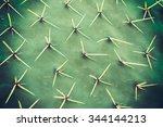 Cactus Texture Natural...