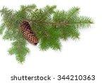 branch of a fir tree with fir...