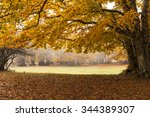 Beech Forest In Autumn Season....