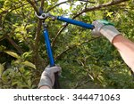 Farmer Pruning An Apple Tree...