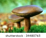 Beautiful Mushroom At  The...