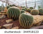 Cactus Planted In An Arid...