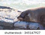 baby seal at kaikoura  new...