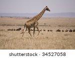 Small photo of Giraffe on the Plains of the Maasia Mara