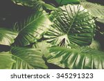 Tropical Leaves Background ...