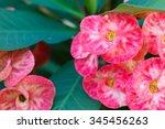 beautiful pink flower.   Shutterstock . vector #345456263