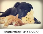 kitten and puppy | Shutterstock . vector #345477077