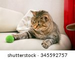 Stock photo playing cat 345592757