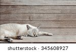 Cat Lay Down On Wood Plank...