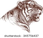 roaring tiger   Shutterstock .eps vector #345756437