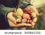 handful of autumn berries and... | Shutterstock . vector #345861233