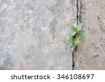 Plant Growing Through Crack In...