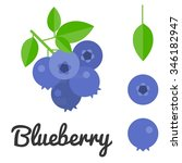 Vector Blueberry  Flat Design
