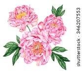 warm pink peonies. watercolor ... | Shutterstock . vector #346207553