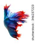 siamese fighting fish  betta...   Shutterstock . vector #346237223