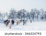 horses on a farm in winter | Shutterstock . vector #346324793