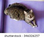 Tabby Cat On The Yoga Mat
